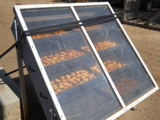 Orchard 2012 Peaches Cut Up on Solar Food Dehydrator