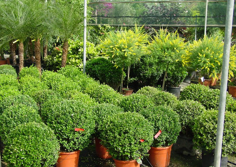 flower shop outdoor plants_full_4