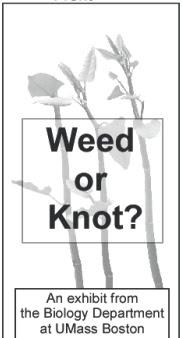 piece of knotweed bookmark