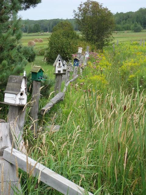 birdhouse fence2