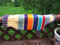 multi color doggy sweater 02