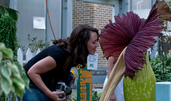 perierga.gr - Tο μεγαλύτερο λουλούδι του κόσμου άνθισε στο Τόκιο!