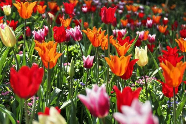 Wir suchen Frühlingsbilder