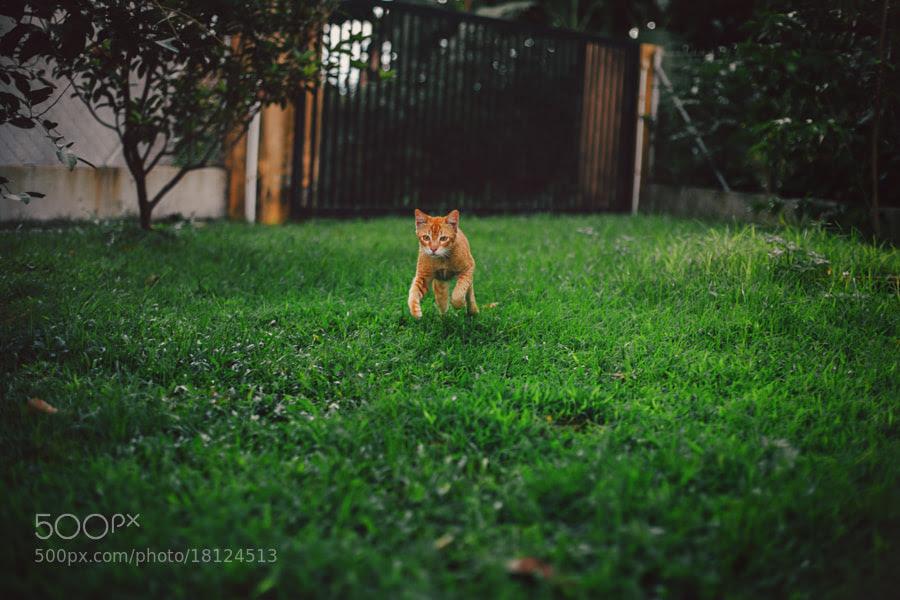 running cat by Nazrin Shah (NazrinShah)) on 500px.com