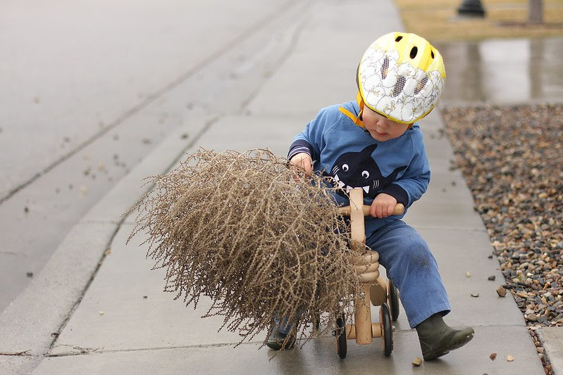 tumbleweed passenger