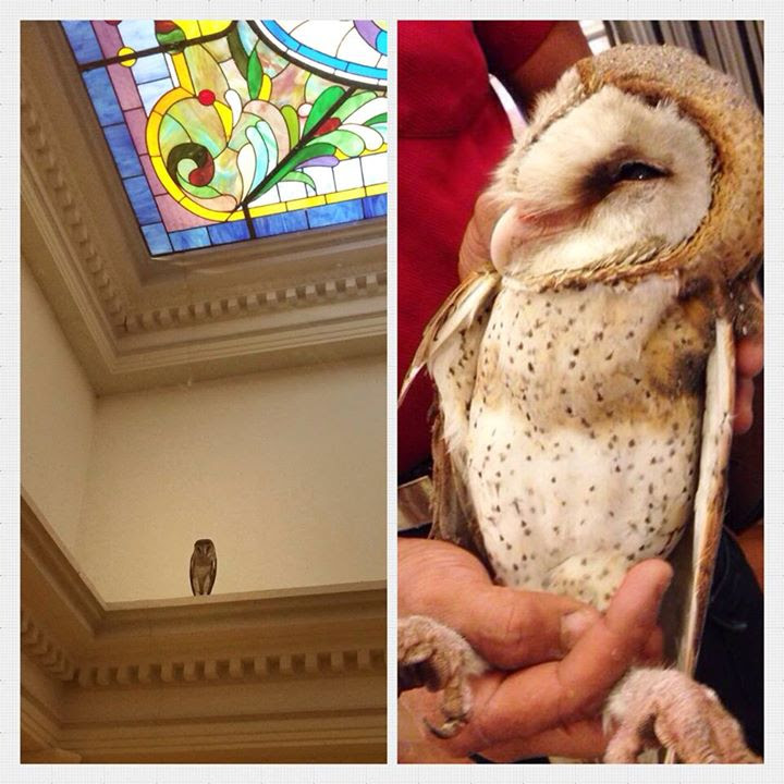 PM's visitor a real hoot