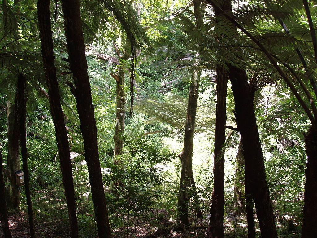 http://upload.wikimedia.org/wikipedia/commons/thumb/3/35/Forest_tiritiri_matangi.jpg/1024px-Forest_tiritiri_matangi.jpg
