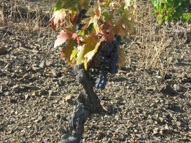 1.colores de la viña