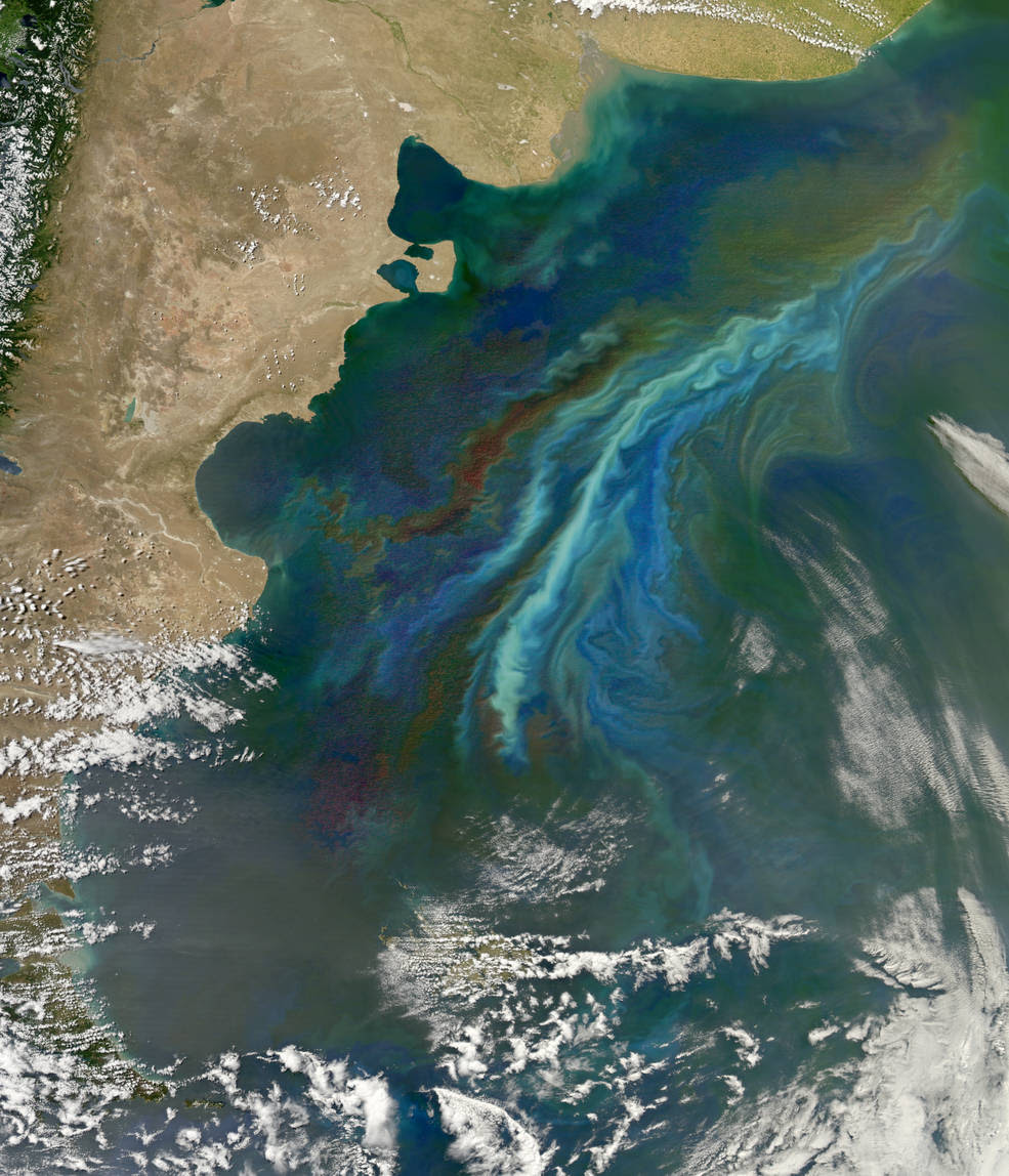 A swirl of chlorophyll in the ocean indicates a plankton bloom