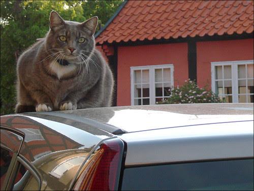 The cats in Gudhjem