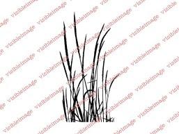 0 Visible Image Small Tall Grass