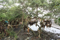 Weeping Mangroves of Carter Road Bandra by firoze shakir photographerno1