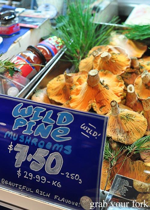 wild pine mushrooms