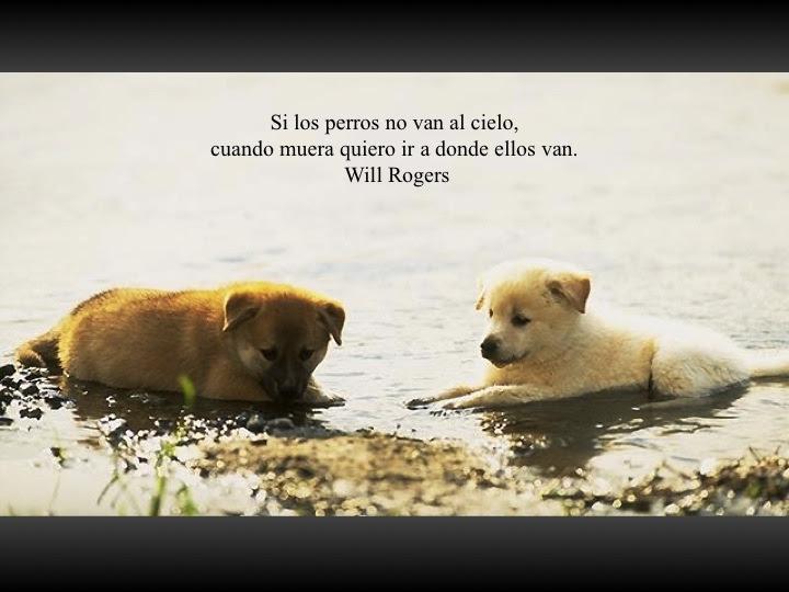 Fotos Con Frases Sobre Perros Mascotas Ecuador