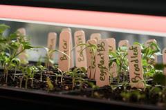 seedlings 141