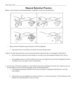 Natural selection worksheet 1  Summer Research Program for