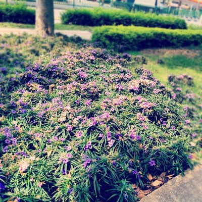 Because I stays at flower road.  (Taken with Instagram)