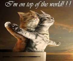 Im On Top Of The World Cat Quotes Quotespicturescom