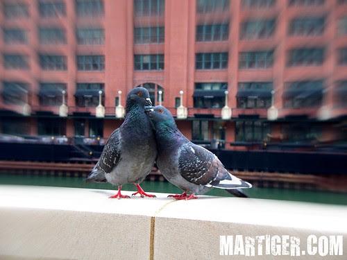 4.26.2009 Chicago (21) m