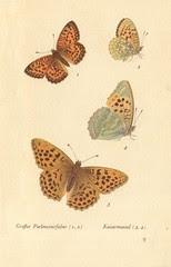 papillons d 5