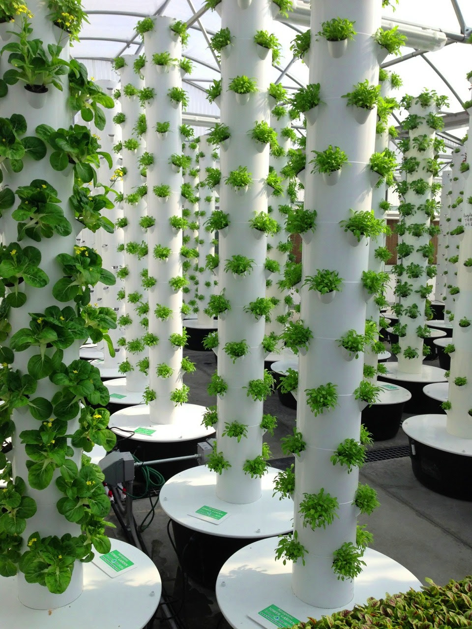 Local Tower Garden Farmer Produces Aeroponic Food for ...