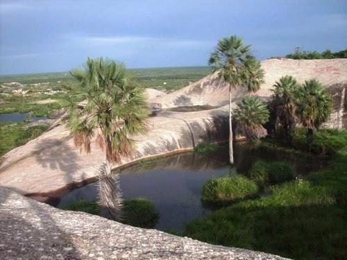 A imagem do dia - Carnaubeira em cima de pedra, como pode isso?