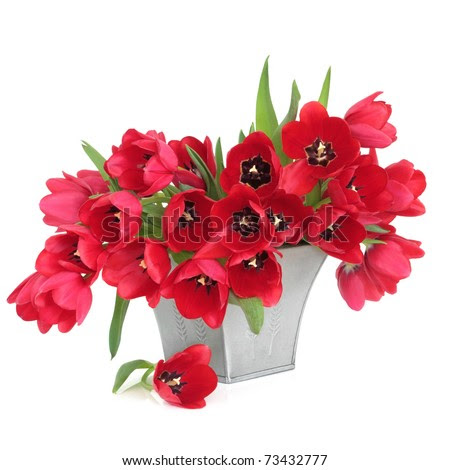 Alstroemeria Red Flowers Vase Isolated On Stock Photo 99038513  Shutterstock