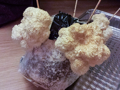 Lions Mane Mushroom