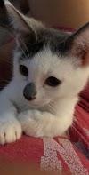«Me dijo que los detestaba» – Comparte las fotos de su padre mientras cuidaba su gato