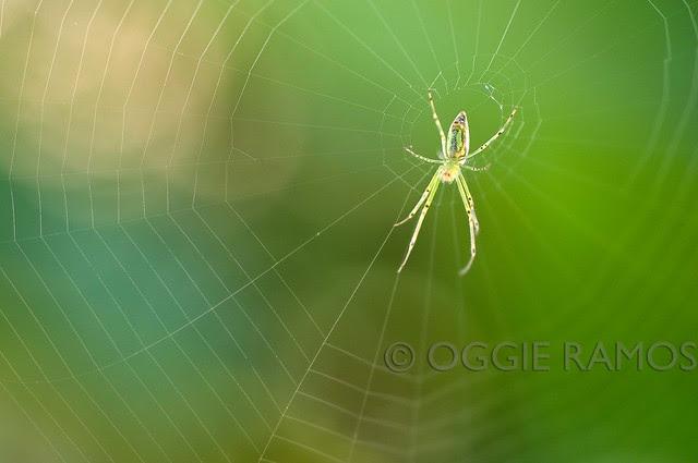 Imugan Spiderweb