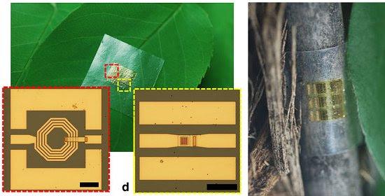 Chip de madeira aponta caminho da eletrônica biodegradável