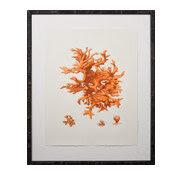 coral picture
