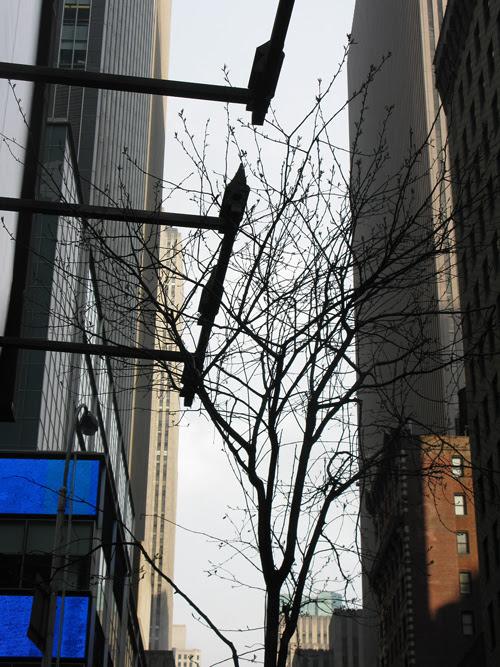 midtown tree with buildings, Manhattan, NYC