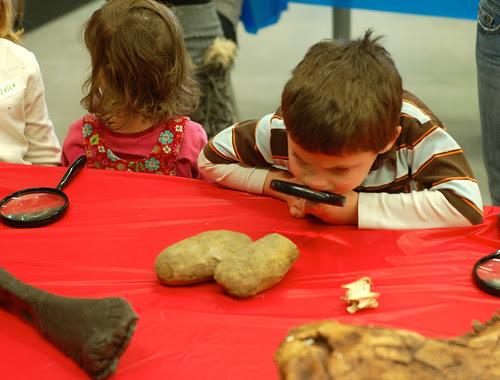 Little paleontologists