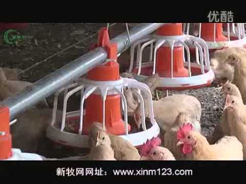 Automatic Poultry Hatchery Equipment