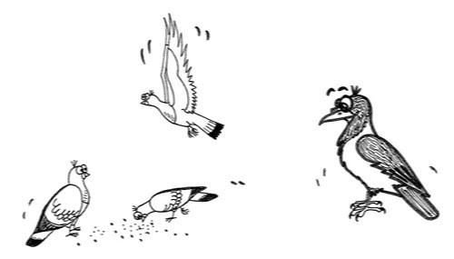 Comic-Whippet-Tauben-und-Krähe