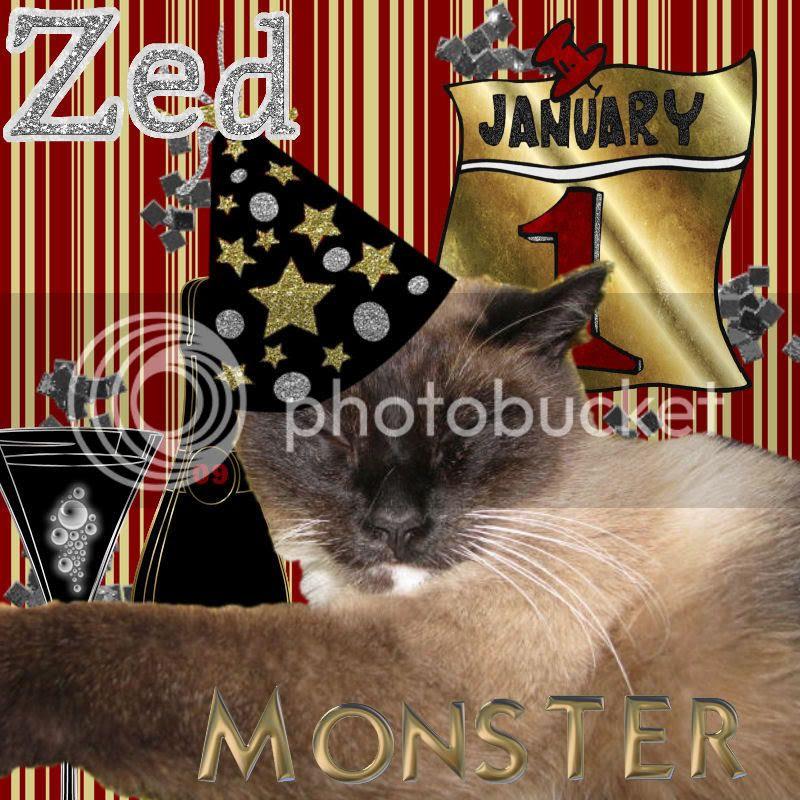 Siamese Cat,Happy New Year
