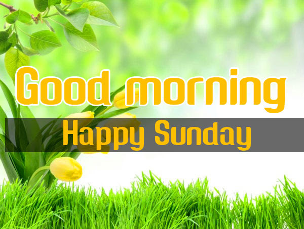 Sunday Good Morning Wishes Wallpaper HD