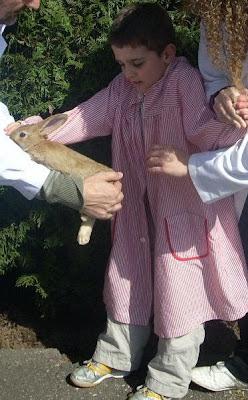 Iago ante un conejo en el colegio