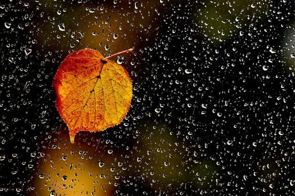 Resultado de imagem para imagens praia e outono