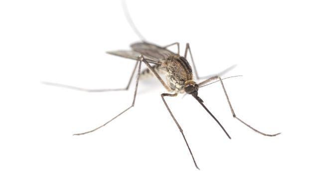 A bug's life: Mosquitoes are worse this summer than they have been for many years.