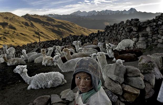 'Depois da morte de seu pai, Alvaro Kalancha Quispe, de nove anos, ajuda na sobrevivência da família cuidando de lhamas na cadeia de montanhas Akamani, em uma área chamada Caluyo, na Bolívia. Moradores da área vivem em casas sem isolamento térmico, sem eletricidade e sem camas. A água vem da neve das montanhas. A sobrevivência, de seus animais. Cada um deles produz cerca de 3 libras (1,4 quilo) de lã por ano e cada libra é vendida 18 bolivianos, aproximadamente US$ 2,60' (Foto: Renée C. Byer)