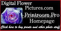 Digital Flower Pictures Printroom Pro