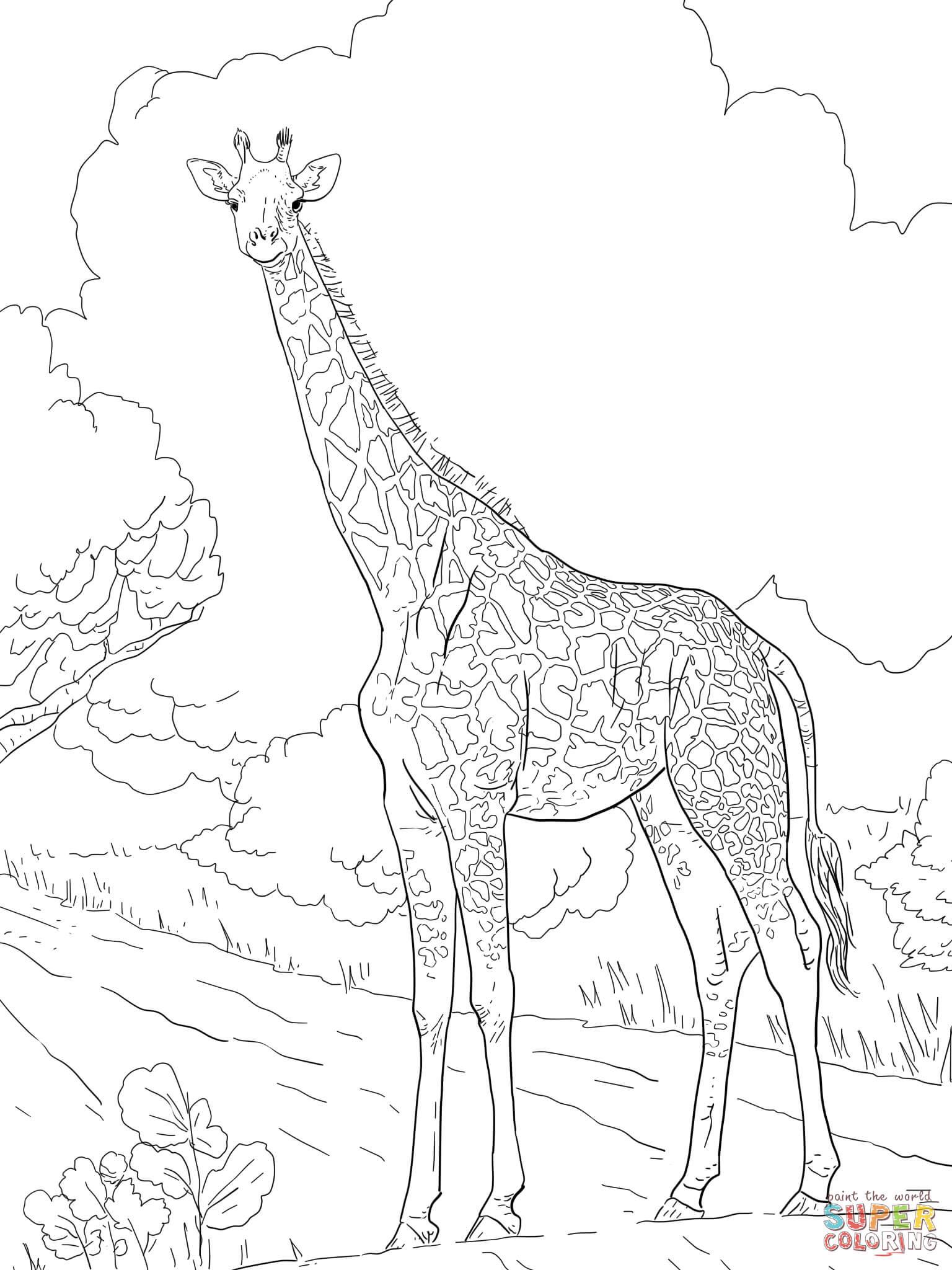 Female Masai Giraffe coloring page | Free Printable ...