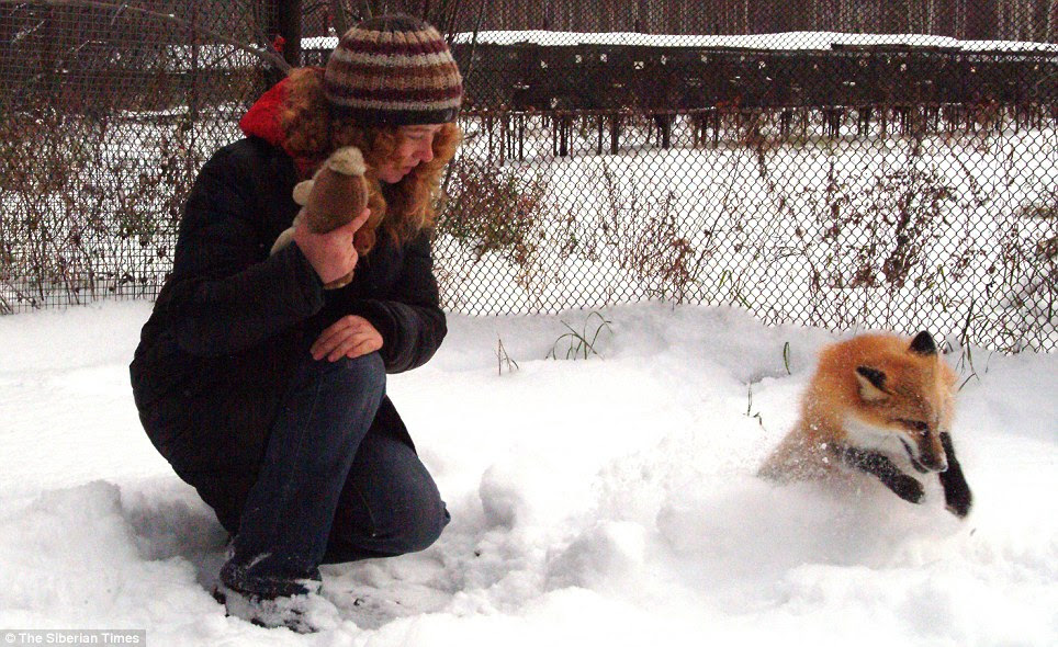 Pounce: Anna plays in the snow. She comes to humans for affection and is little different from any other pet
