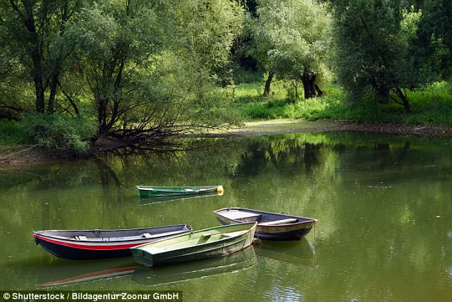 The attack took place the Siegaue Nature Reserve (pictured) on April 2, shortly after midnight. The woman and her boyfriend were asleep when Eric X cut through the tarpaulin, threatened them with a tree saw and ordered them to hand over their valuables - six euros (£5.35) and a music box