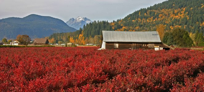 Image result for Sales of farmland in B.C. surged