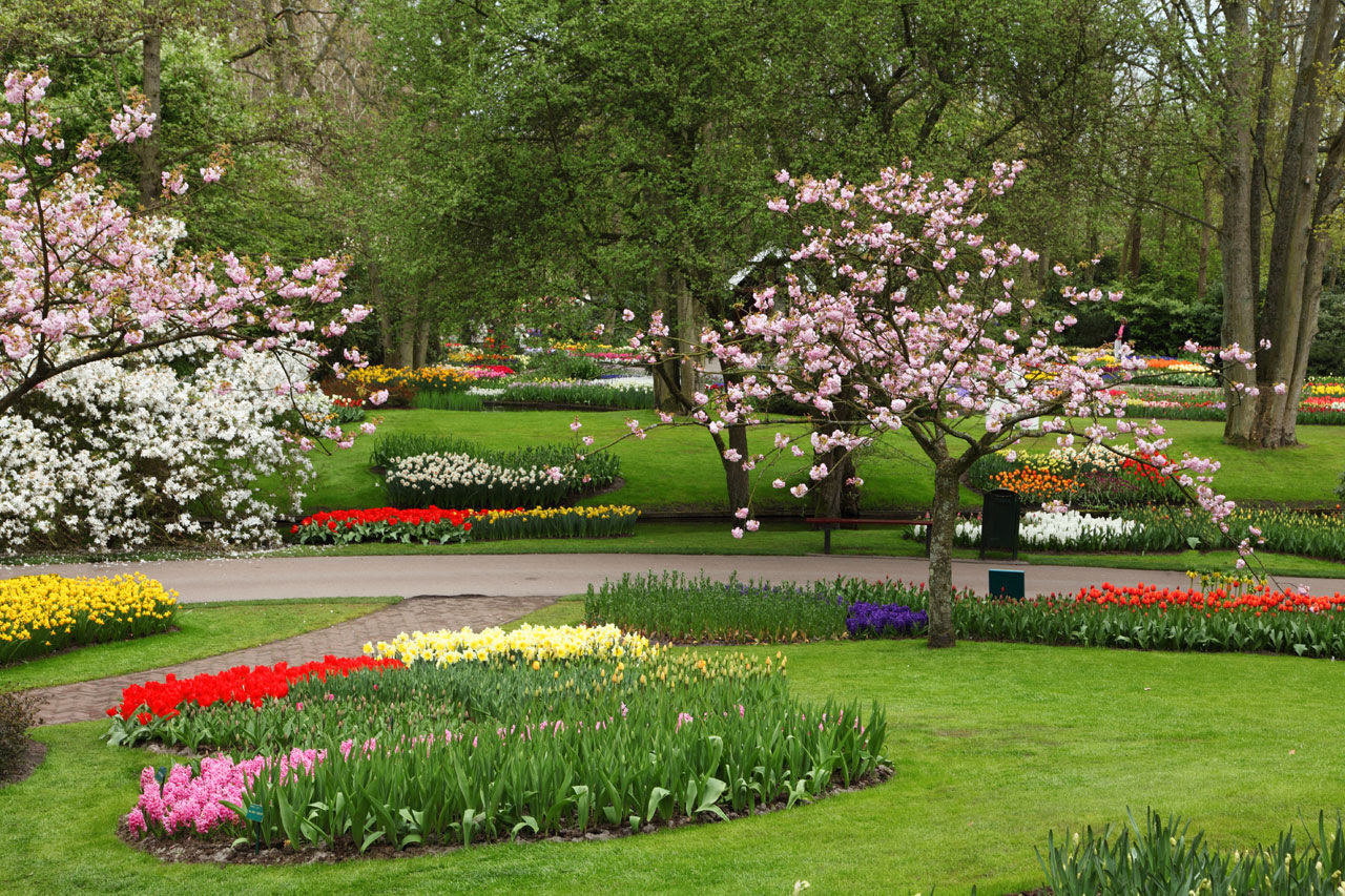 Free Beautiful Flower Garden Images