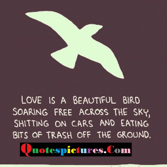 Birds Quotes Love Is A Beautiful Bird Soaring Free Across The Sky