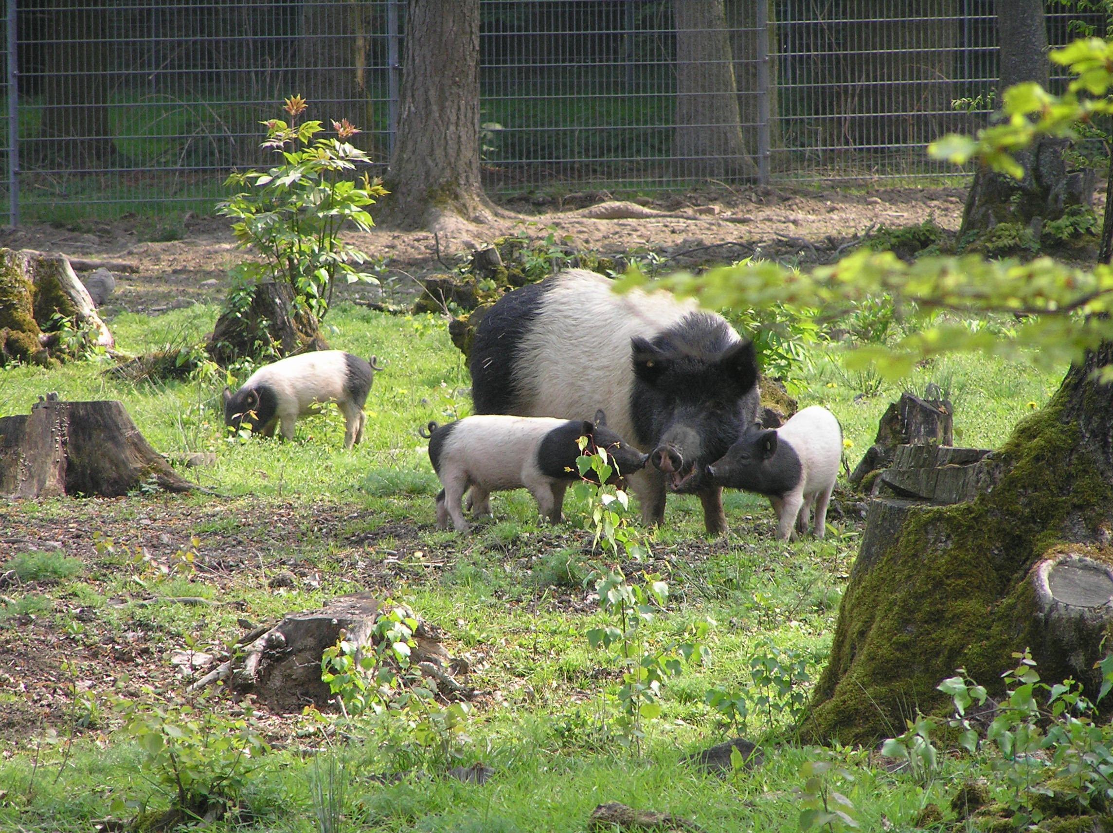 http://upload.wikimedia.org/wikipedia/commons/b/b8/Hessenpark_Waldweide.JPG